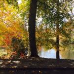 Fall Color in Asheville, North Carolina